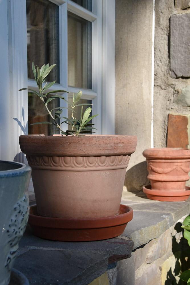 Kübelpflanze im Garten