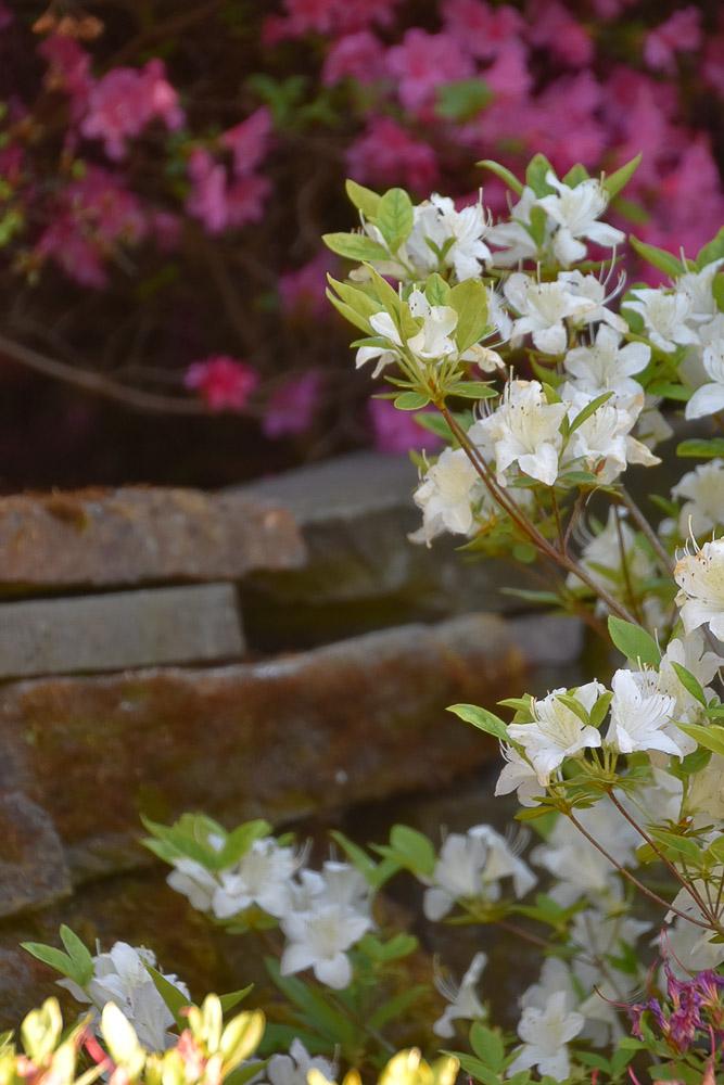 Gartentraum mit weißen Blüten