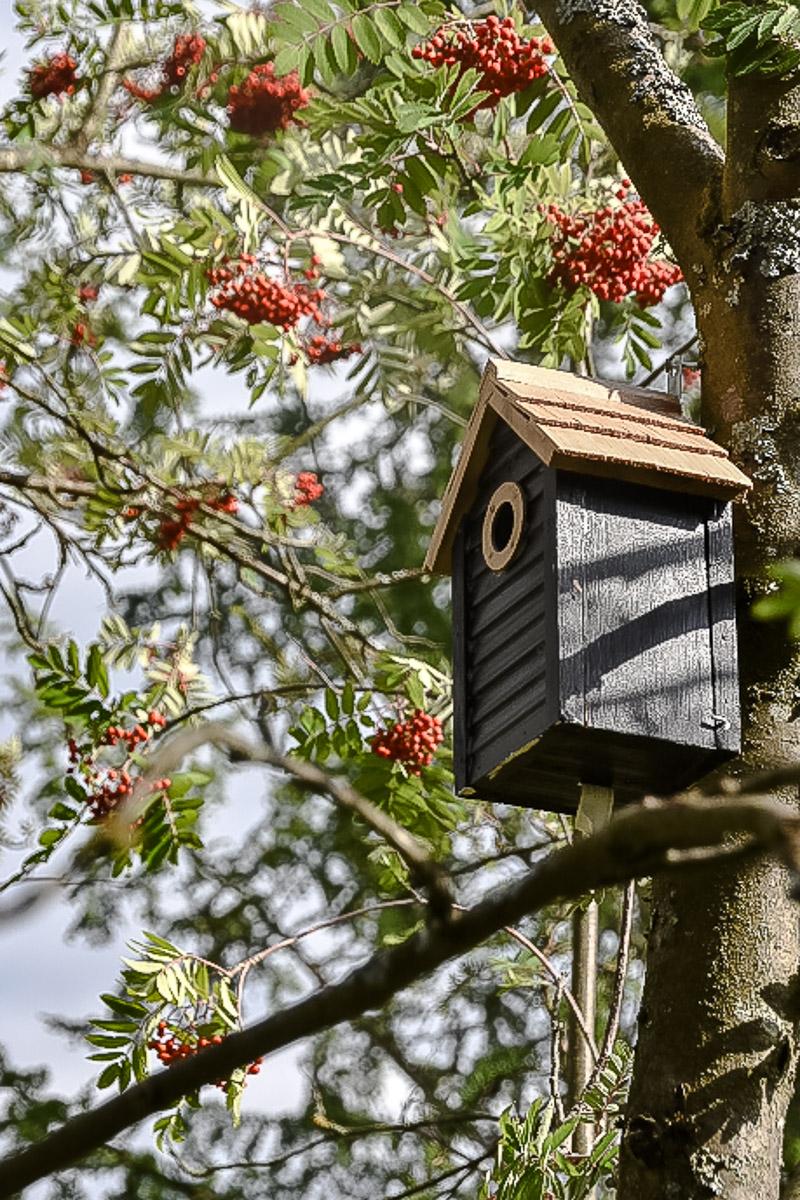 Vogelhaus im wilden Teil des Gartens