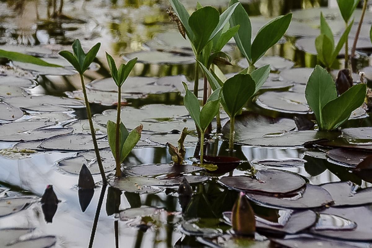 Teich im naturnahen Garten