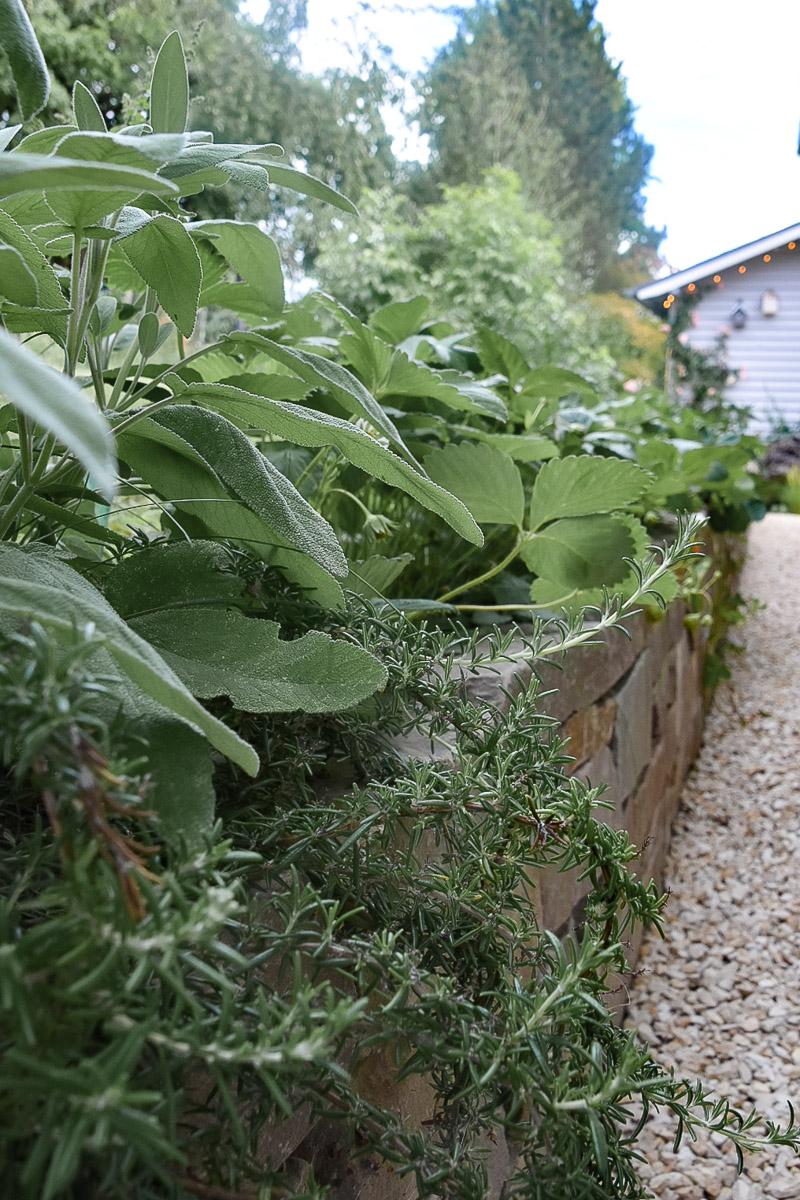 Kräuterbeet im eigenen Garten