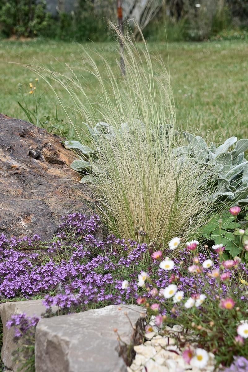 Gräser und Blumen als tolle Kombination