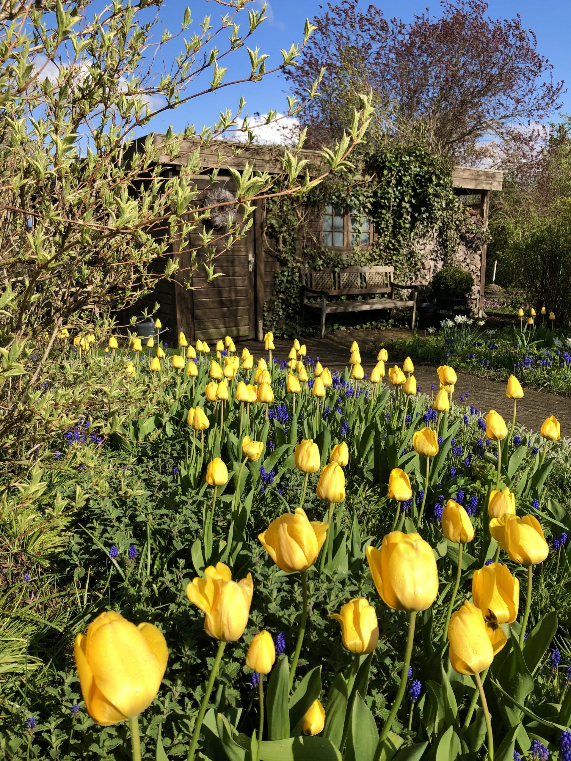 englischer Garten im Frühjahr