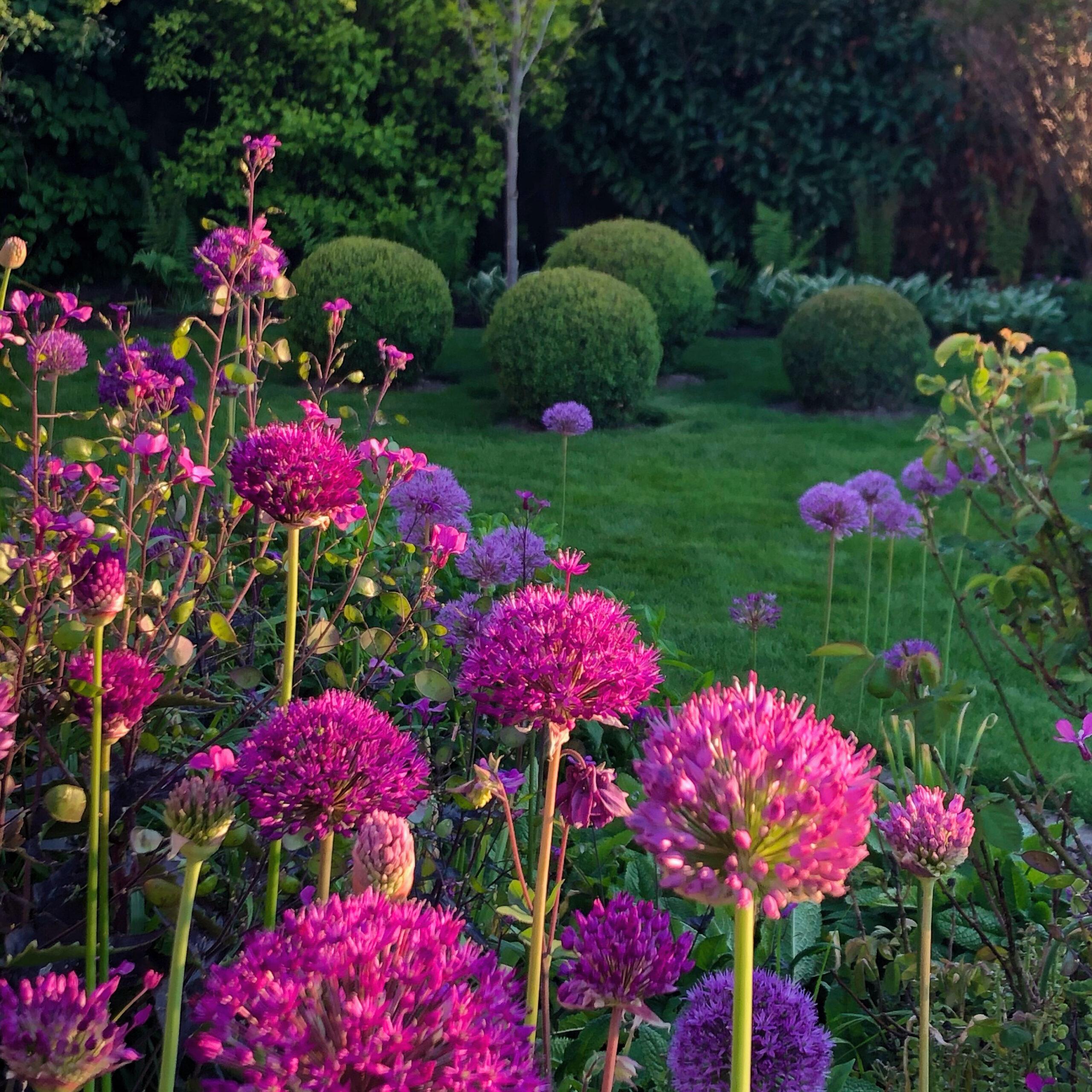 Blütenpracht englischer Garten