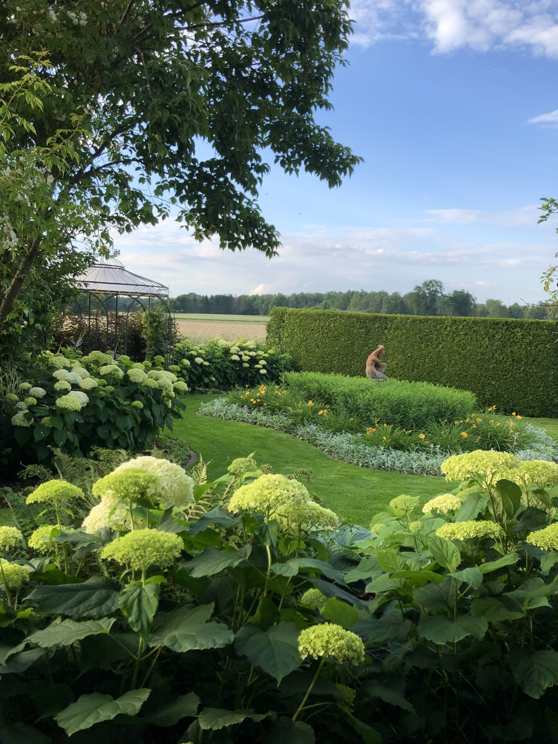 Hortensien englischer Garten
